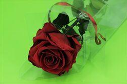 Sk Růže na stonku premium burgundy - velkoobchod, dovoz květin, řezané květiny Brno
