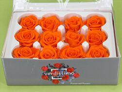 Sk Hlavy růže mini orange 12pcs - velkoobchod, dovoz květin, řezané květiny Brno