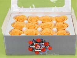 Sk Hlavy růže mini peach 12pcs - velkoobchod, dovoz květin, řezané květiny Brno