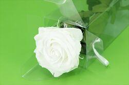 Sk Růže na stonku premium white - velkoobchod, dovoz květin, řezané květiny Brno