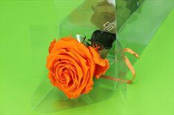 Sk Růže na stonku premium orange - velkoobchod, dovoz květin, řezané květiny Brno