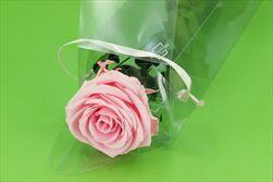 Sk Růže na stonku premium pastel pink - velkoobchod, dovoz květin, řezané květiny Brno