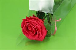 Sk Růže na stonku premium dark pink - velkoobchod, dovoz květin, řezané květiny Brno