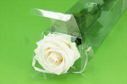 Sk Růže na stonku premium champagne - velkoobchod, dovoz květin, řezané květiny Brno