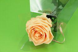 Sk Růže na stonku premium peach - velkoobchod, dovoz květin, řezané květiny Brno