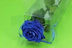 Sk Růže na stonku premium dark blue - velkoobchod, dovoz květin, řezané květiny Brno