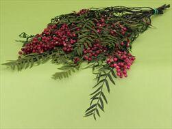 Sk Peppertree - velkoobchod, dovoz květin, řezané květiny Brno