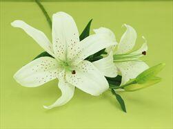 Uk Lilie 85cm - velkoobchod, dovoz květin, řezané květiny Brno