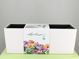 V OBAL BALCONERA/50 COLOR BÍLÁ - velkoobchod, dovoz květin, řezané květiny Brno