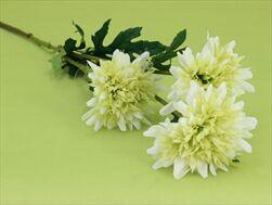 Uk corn flower X3 72cm cream - velkoobchod, dovoz květin, řezané květiny Brno