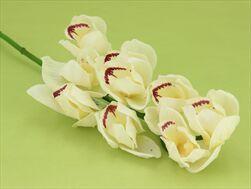 Uk Orchid cymbidium 65cm cream - velkoobchod, dovoz květin, řezané květiny Brno