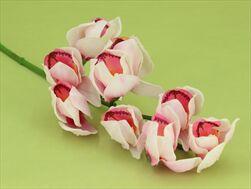 Uk Orchid cymbidium 65cm pink/white - velkoobchod, dovoz květin, řezané květiny Brno