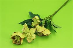 Uk Heleborus 5 květů 35cm zelený - velkoobchod, dovoz květin, řezané květiny Brno