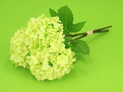 Uk Schneeball X3/25cm green - velkoobchod, dovoz květin, řezané květiny Brno