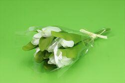 Uk tulipán X7/28cm krémový - velkoobchod, dovoz květin, řezané květiny Brno