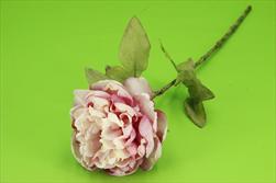 Uk pivoňka 62cm sušený vzhled růžová - velkoobchod, dovoz květin, řezané květiny Brno