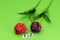 Uk Tulipán 53cm - velkoobchod, dovoz květin, řezané květiny Brno
