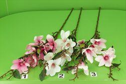 Uk Magnolie větev - velkoobchod, dovoz květin, řezané květiny Brno