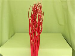 Su mitsumata 100cm/10ks červená - velkoobchod, dovoz květin, řezané květiny Brno