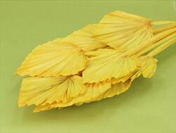 SUŠINA PALM SPEAR LARGE x10 YELLOW - velkoobchod, dovoz květin, řezané květiny Brno