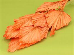 SUŠINA PALM SPEAR LARGE x10 ORANGE - velkoobchod, dovoz květin, řezané květiny Brno