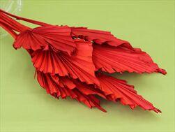 SUŠINA PALM SPEAR LARGE x10 RED - velkoobchod, dovoz květin, řezané květiny Brno