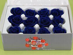 Sk Hlavy růže mini dark blue 12pcs - velkoobchod, dovoz květin, řezané květiny Brno