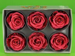 Sk Hlavy růže extra dark pink 6pcs - velkoobchod, dovoz květin, řezané květiny Brno
