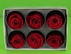 Sk Hlavy růže extra burgundy 6pcs - velkoobchod, dovoz květin, řezané květiny Brno