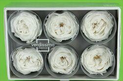 Sk hlavy růží Garden 6pcs white - velkoobchod, dovoz květin, řezané květiny Brno