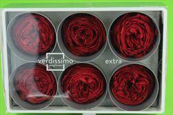 Sk hlavy růží Garden 6pcs red - velkoobchod, dovoz květin, řezané květiny Brno