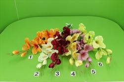 Uk mečík mix - velkoobchod, dovoz květin, řezané květiny Brno