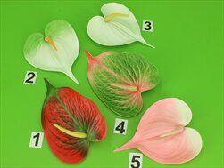 UK Květ anturie  - velkoobchod, dovoz květin, řezané květiny Brno
