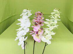 UK orchidea 120cm - velkoobchod, dovoz květin, řezané květiny Brno