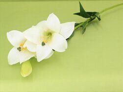 Lilie umělá bílá - velkoobchod, dovoz květin, řezané květiny Brno