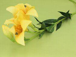 Lilie umělá žlutá - velkoobchod, dovoz květin, řezané květiny Brno