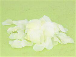 Okvětní lístky S/400 bílá - velkoobchod, dovoz květin, řezané květiny Brno