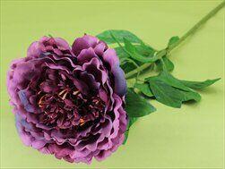 Pivoňka umělá fialová - velkoobchod, dovoz květin, řezané květiny Brno