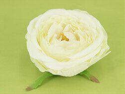 Růže Austin vazbová pr.10cm 6ks bílá - velkoobchod, dovoz květin, řezané květiny Brno
