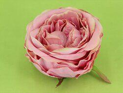 Růže Austin vazbová pr.10cm 6ks růžová - velkoobchod, dovoz květin, řezané květiny Brno