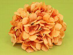 Hortenzie květ textil pr.18cm oranž - velkoobchod, dovoz květin, řezané květiny Brno