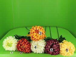 Uk chryzantéma lux - velkoobchod, dovoz květin, řezané květiny Brno