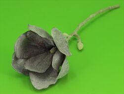 Uk magnolia frosted 45cm - velkoobchod, dovoz květin, řezané květiny Brno