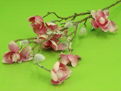 Uk Magnolia 87cm zasněžená - velkoobchod, dovoz květin, řezané květiny Brno