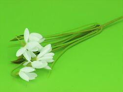 Uk Sněženka X3/30cm bílá - velkoobchod, dovoz květin, řezané květiny Brno