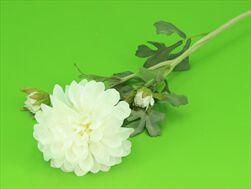 Uk Dahlia 68cm bílá - velkoobchod, dovoz květin, řezané květiny Brno