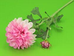 Uk Dahlia 68cm růžová - velkoobchod, dovoz květin, řezané květiny Brno