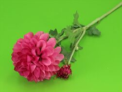 Uk Dahlia 68cm fuchsiová - velkoobchod, dovoz květin, řezané květiny Brno