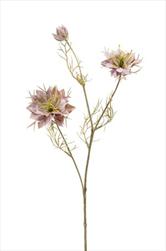 Uk Nigella lt.purple 58cm - velkoobchod, dovoz květin, řezané květiny Brno