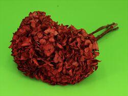 Hydrangea Stabilizovaná Červená 5ks - velkoobchod, dovoz květin, řezané květiny Brno